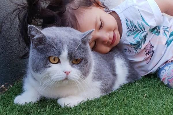 Mengupas Hukum Jual Beli Kucing dalam Islam